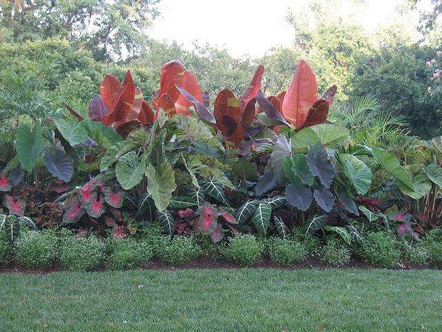 Plant summer bulbs such as caladiums, dahlias, cannas and elephant ears.