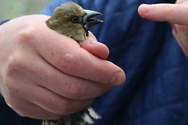 Birds Adapting to Chernobyl's Radiation | I Fucking Love Science http://www.iflscience.com/plants-and-animals/birds-adapting-chernobyls-radiation