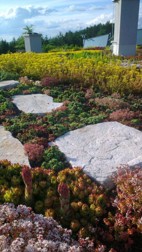 Dům bude obývat rodina krajinářského architekta, jehož zálibou je i pěstování exotických rostlin. #green #roof #střecha