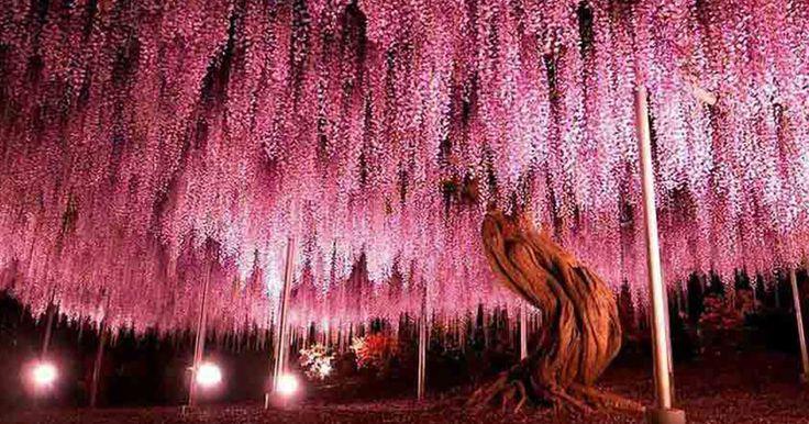 Tα 17 ομορφότερα δέντρα πάνω στη γη που δημιούργησε η Μητέρα Φύση!   Τι λες τώρα;
