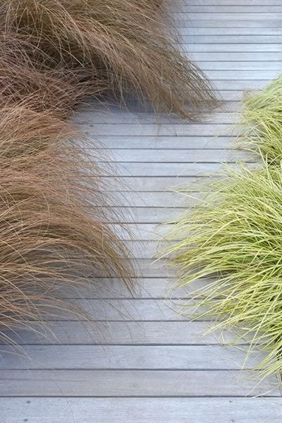 weathered wooden path lined with beautiful perennial grasses