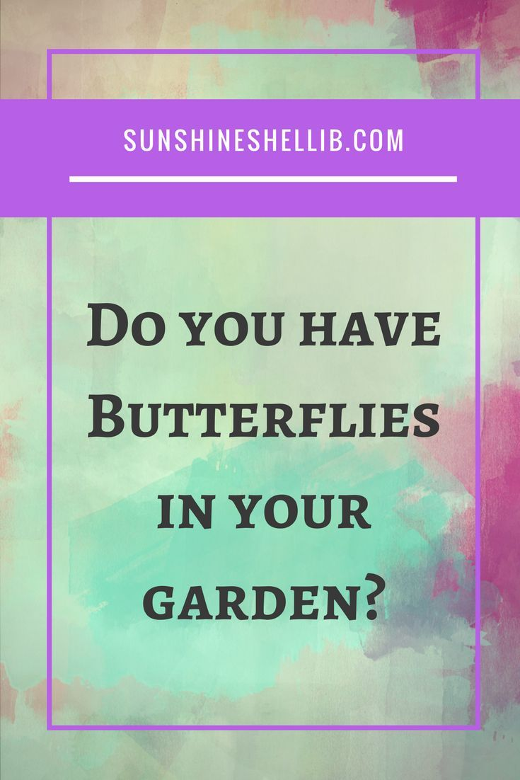 HOW TO ATTRACT BUTTERFLIES TO YOUR GARDEN. Creating a garden that will attract butterflies for the best butterfly watching experience is fun for children and adults alike #BUTTERFLY #BUTTERFLIES #BUTTERFLYWONDERLAND #BUTTERFLYBUSH CRAFTS, PRINTABLES, WINGS, DESIGN, DIY, GARDEN, TEMPLATE, PARTY, COSTUMES, DECORATION, LIFE CYCLE