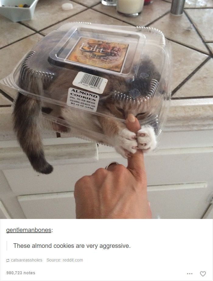 48 Of The Funniest Cats On The Internet