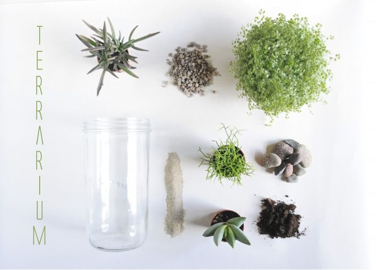 Terrarium : bocal + plantes + sable + terreau + gravier + cailloux