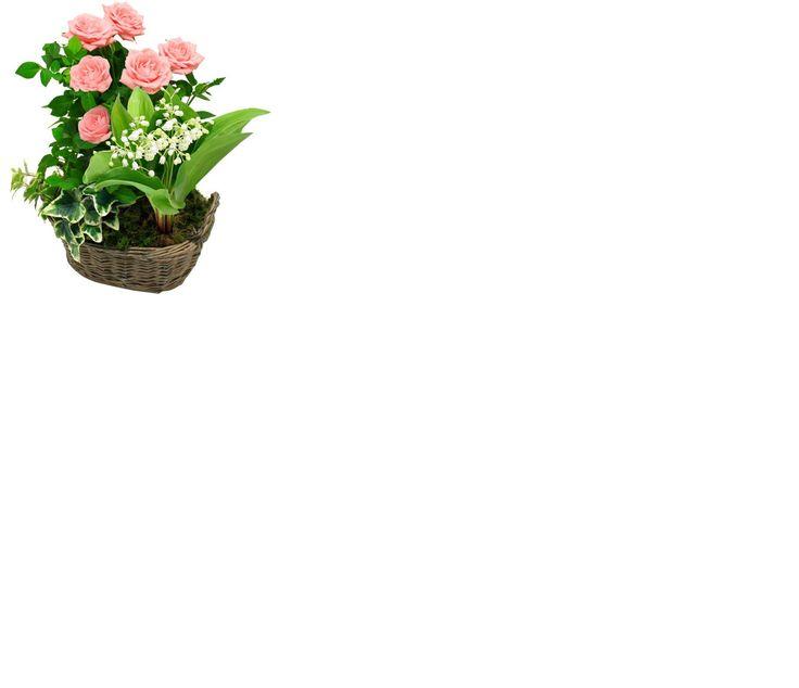 les 34 meilleures images du tableau fleurs et cadeaux sur pinterest chocolats fleuristes et. Black Bedroom Furniture Sets. Home Design Ideas