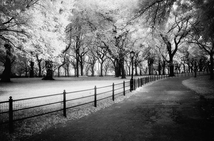Pathway, Central Park, NY