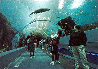 #7. New England Aquarium Top 10 Tourist Attractions in Boston – Things To See in Boston
