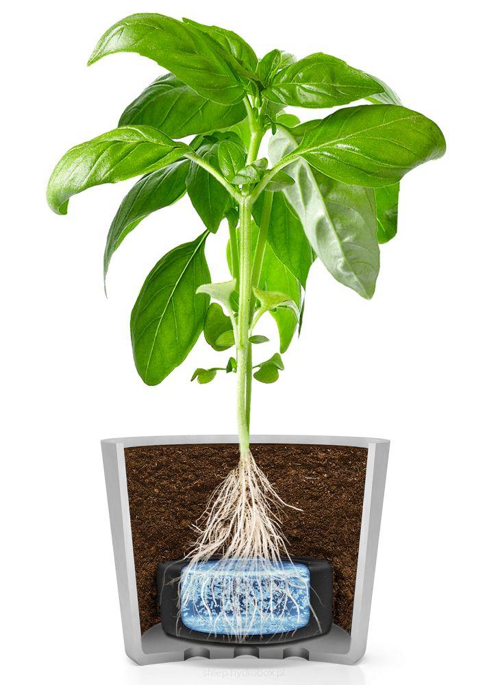 Hydrobox przeznaczony do hodowli kwiatów i ziół - Hydrobox 1S. #hydrobox #hydroboxpl #nawadnianie #watering #kwiaty #ziola #hodowla #herbs #flowers #plants #planting #flowerpot