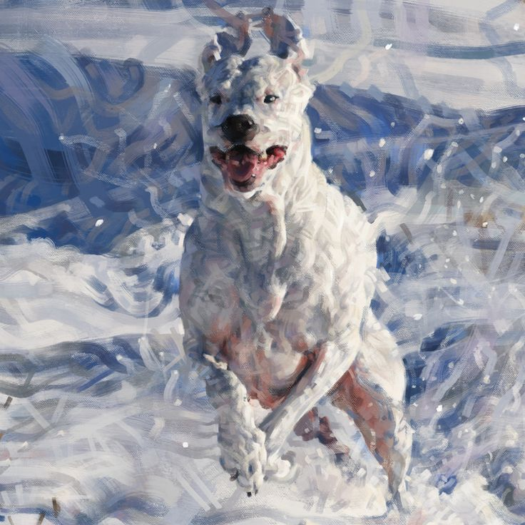 Close up of White Dog Running Through Snow by Lindsey Lively.  Digital Painting.