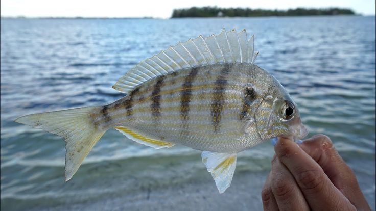 EXPEN$IVE SECRET! Bait and Tackle Shops DON'T Want YOU to KNOW! How to Catch Pinfish- Tackle Tuesday