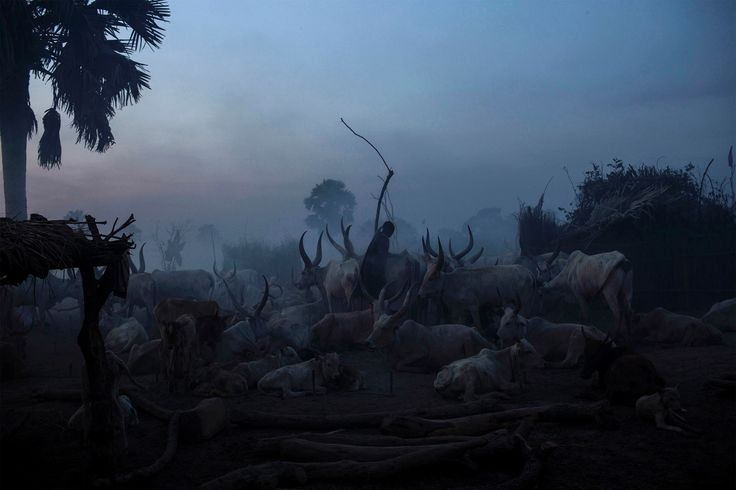 A South Sudanese man from the Dinka ethnic group stands among cattle in Yirol on 12 February 2014