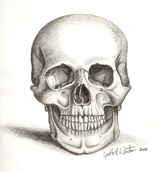 A; Skull Art by ~cynart123 on deviantART