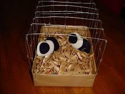 Nodig: knuffel cavia's,ijzerdraad, houtkrullen en doos
