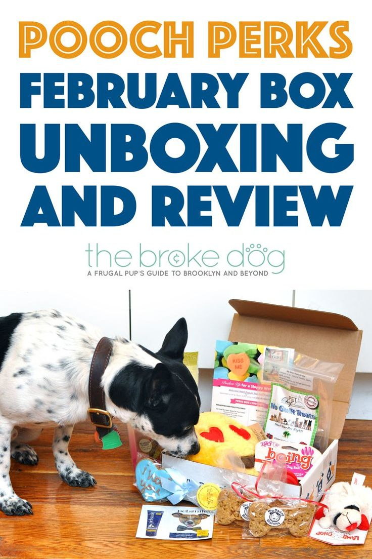 Pooch Perks February Box Unboxing and Review Dog mom