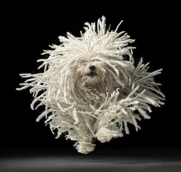 Best Dry Mop For Dog Hair