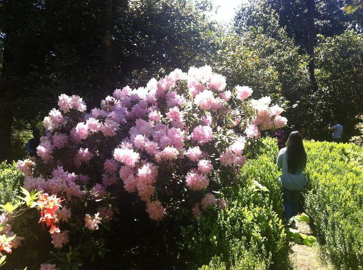 Parque Botánico El Cisne: recorrer la naturaleza para llenarse de colores