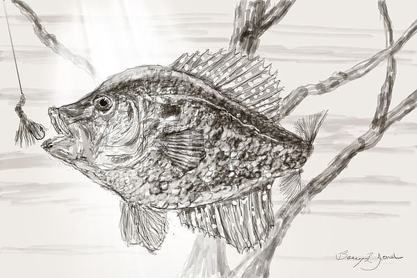 New print available on barry-jones.artistwebsites.com! - 'Crappie Time' by Barry Jones - http://barry-jones.artistwebsites.com/featured/crappie-time-barry-jones.html