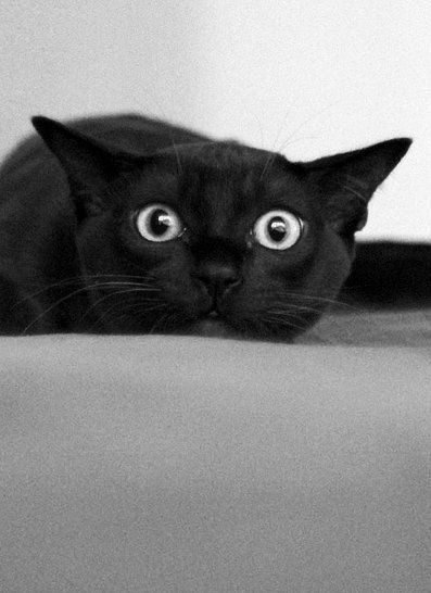 Cats Eyes Dilated When Playful