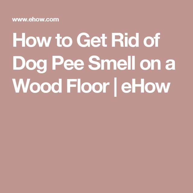 Best 25 Dog Pee Smell Ideas On Pinterest Removing Dog