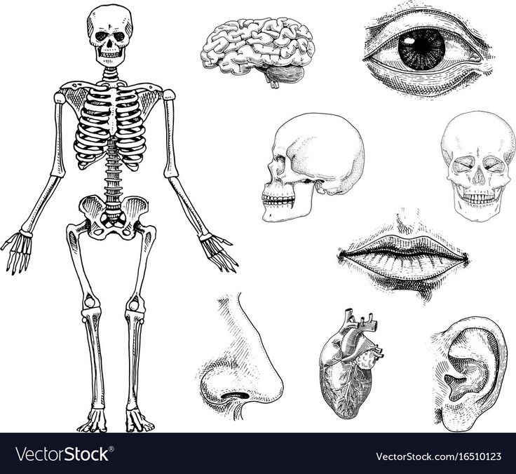370 best A&P images on Pinterest | School, Studying and Human body