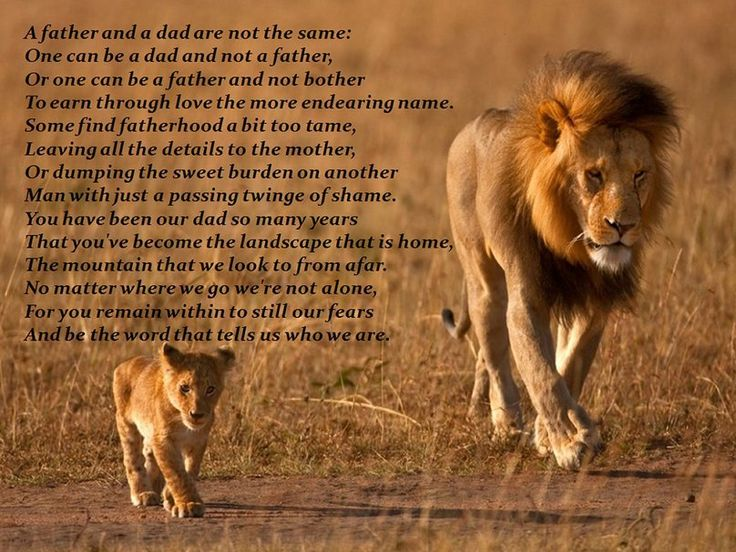 Vaders gedicht * A vader en een vader zijn N... wallpaper