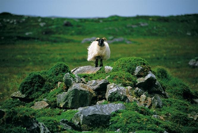 Galerie Photo de l'Irlande - Aguila Voyages