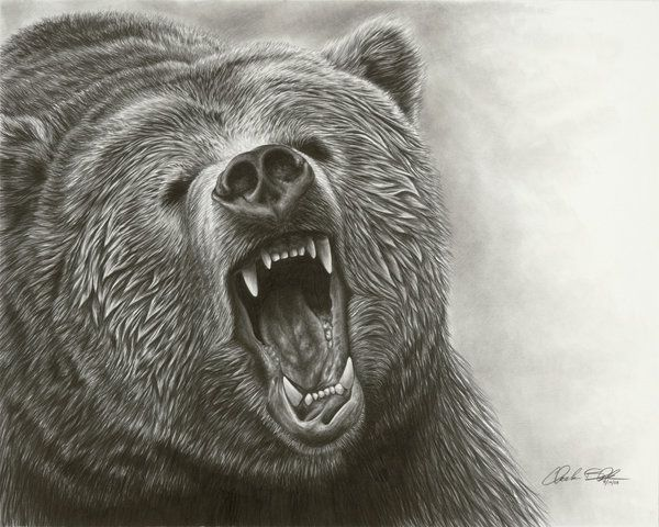 just awesome bears pinterest awesome