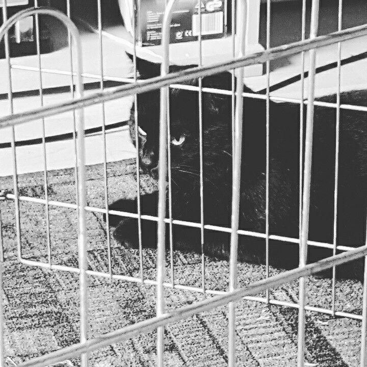 Sam behind bars