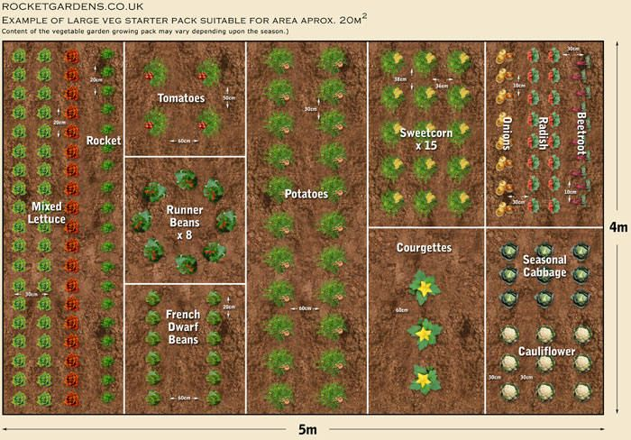 Large vegetable garden layout garden ideas vegetable garden garden vegetable garden planner for Large vegetable garden design plans