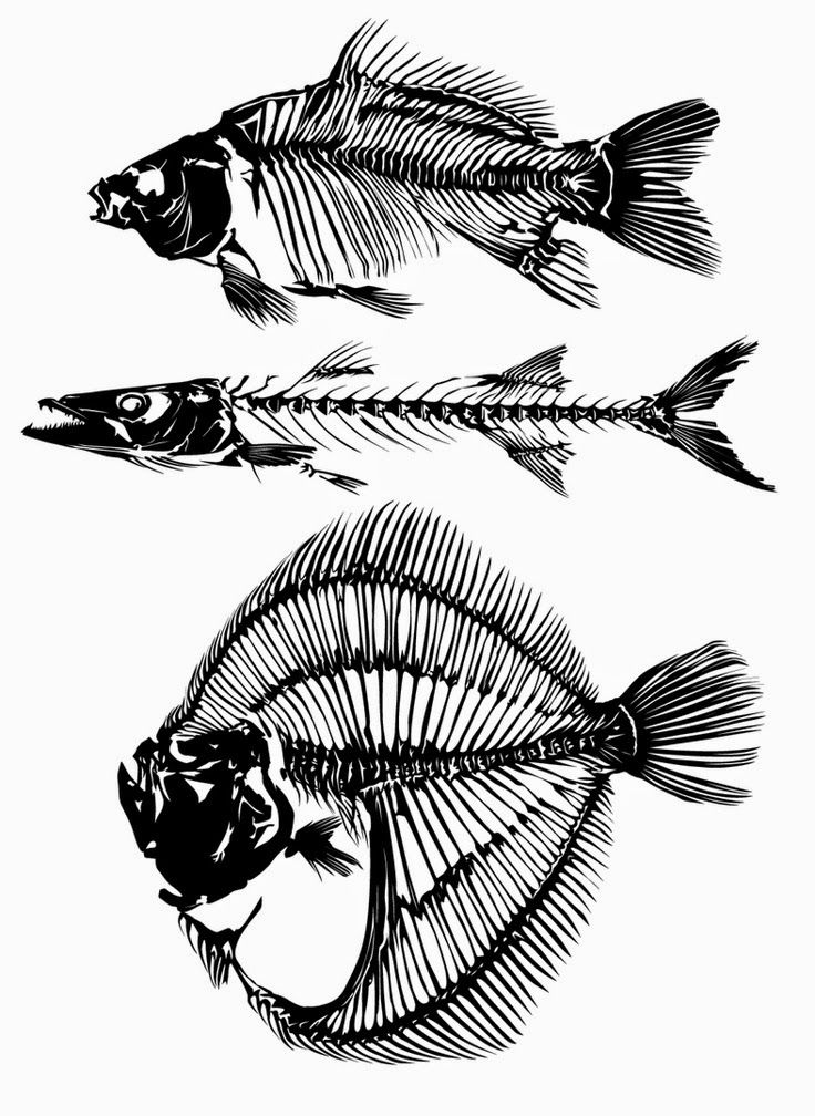 Skeletons For The Fish Collage Artwork