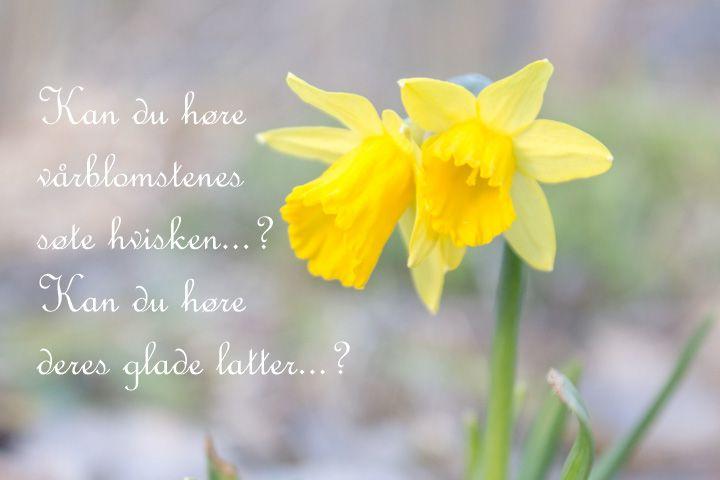 Vårblomstenes søte hvisken... https://www.facebook.com/bilderfrahjertet