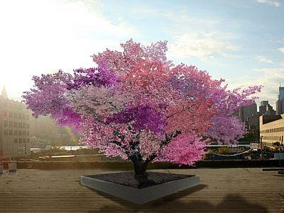 Renderingový obrázek stromu v plném květu. Každá odrůda má svůj charakteristický barevný odstín, který činí strom zajímavým už jen po vizuální stránce.