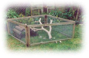 1000 ideas about turtle enclosure on pinterest tortoise
