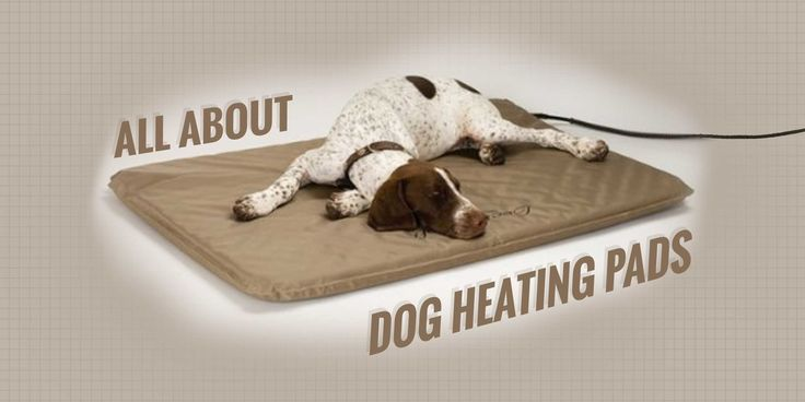 Dog heating pads add extra warmth to your dog's bed. They can be electric, microwaveable or self-heating. We list the best heating pads for dogs.