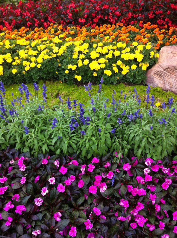 17 Best images about Rainbow Garden on Pinterest   Gardens ...