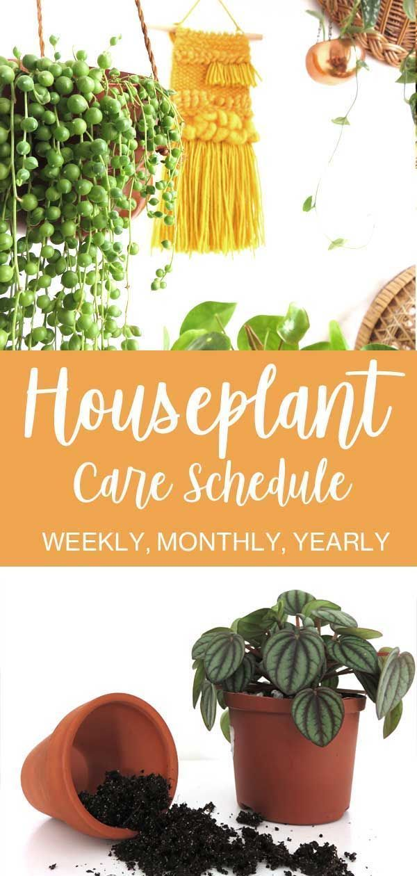 Beginners Guide To Basic Houseplant Care House Plant Care