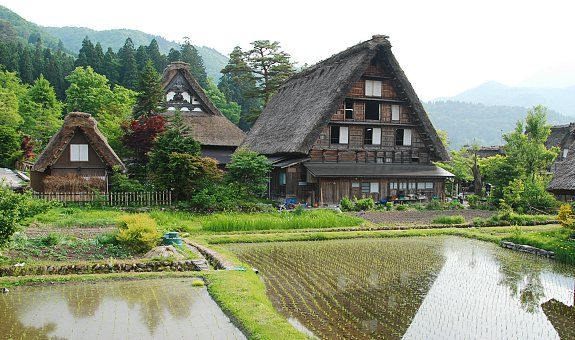 """Shirakawa-go  - located in the Shogawa River Valley in Gifu Pref. Gassho-zukuri means """"constructed like hands in prayer"""", as the farmhouses' steep thatched roofs resemble the hands of Buddhist monks pressed together in prayer. The architectural style developed over many generations and is designed to withstand the large amounts of heavy snow that falls in the region during winter. The roofs, made without nails, provided a large attic space used for cultivating silkworms."""