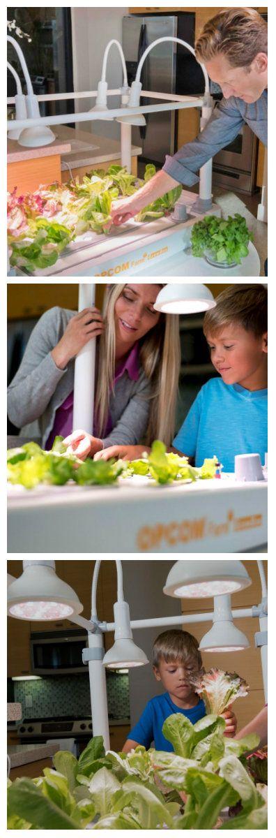 Компания GrowBox предложила новое решение гидропоники, домашняя мини ферма «GrowBox», которое позволяет круглогодично выращивать и собирать до 50 видов съедобных растений в помещении. #домашняяминиферма #дополнительноеосвещениедлярастений #лампыдляосвещениярастений #освещениедлярастений #освещениерастенийсветодиодами #светодиодноеосвещениедлярастений #светодиодныефитолампы #светодиодныефитолампыдлярастений #фитосвет #фитосветдлярастений #lednews