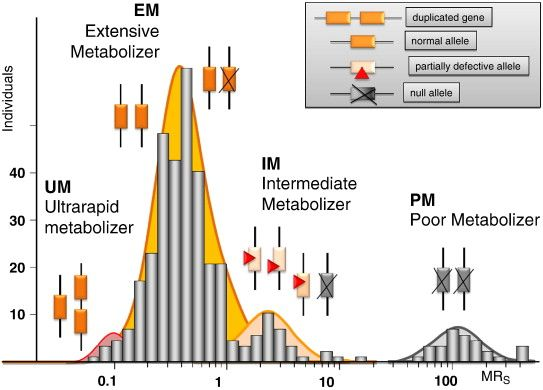 Cytochrome P450 enzymes in drug metabolism: Regulation of gene expression, enzyme activities, and impact of genetic variation — ScienceDirect