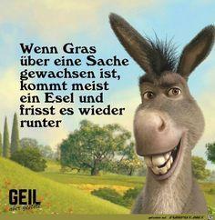 lustiges Bild 'Wenn Grass ueber die Sache gewachsen ist.jpg' von Floh. Eine von 11217 Dateien in der Kategorie 'klasse Sprüche und Witze' auf FUNPOT.