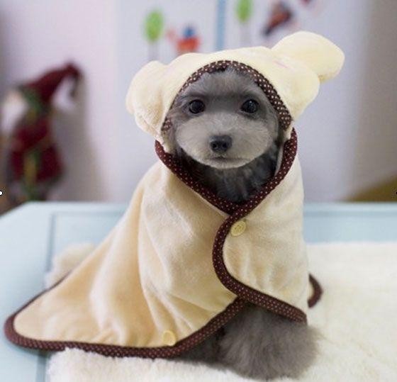 Best 25+ Cheap dog clothes ideas on Pinterest   Cheap ...