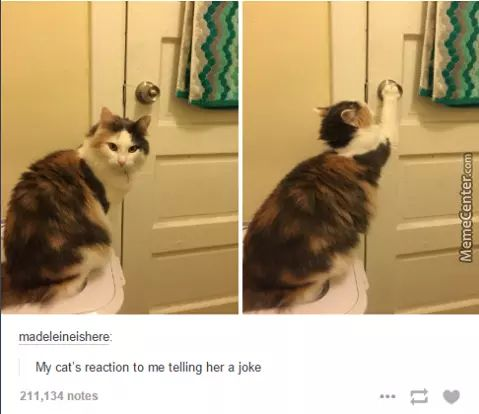 She's Either Going Out To Call The Police Or She's Locking The Door To Beat You Up. Cats Can't Take A Joke, Damn It.