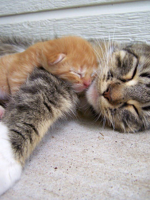 so warm here !!: Sleepy Time, Snuggle, Baby Kittens, Cat Naps, Naps Time, Baby Kitty, Animal, Cat Lady, Baby Cat