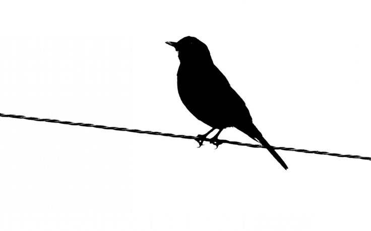 silhouettes of birds | French words. In cursive. Because those two things are pretty.
