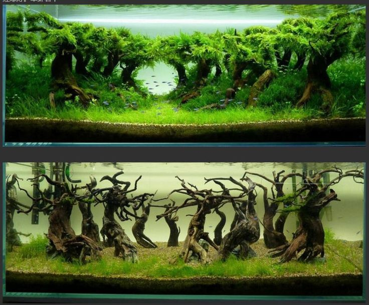 Sublime 100 Aquascape Ideas https://meowlogy.com/2017/03/27/100-aquascape-ideas/ For a diverse and more successful aquarium, various different kinds of plants ought to be used. Inside this case always elect for plastic plants or you could say artificial plants that are available in a range to pick from. For this reason, you need to put them under plants that are taller. In case you are growing high maintenance plants you might want to think about an aquatic soil or clay.
