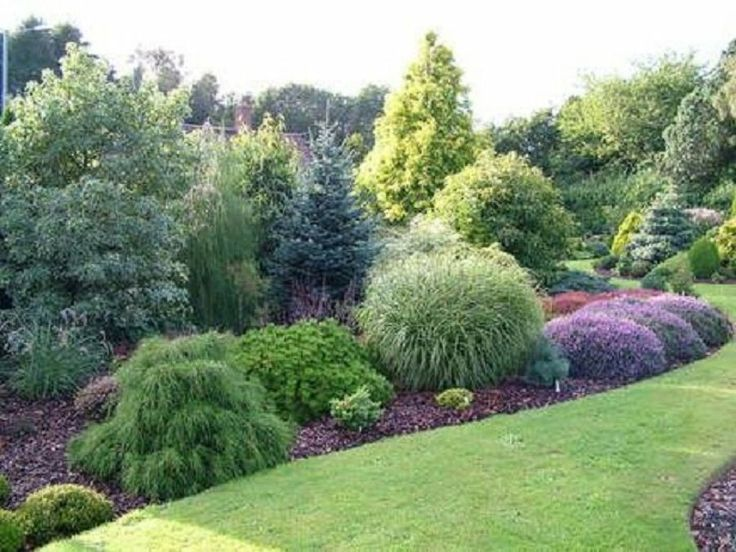 1000 Images About Conifer Gardens On Pinterest Gardens 400 x 300