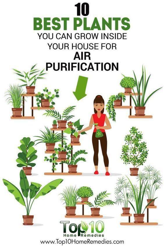 8 Air Purifying Herbs Plants
