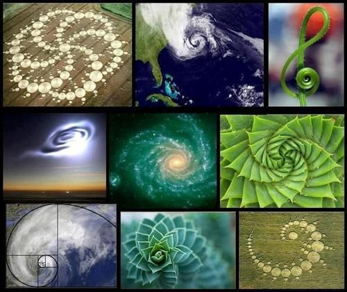 The O Jays A Symbol And Nature: Fibonacci In Nature