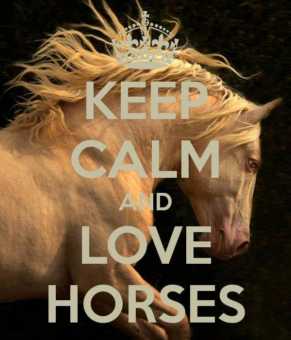 awesome horse wallpapers keep calm - photo #35