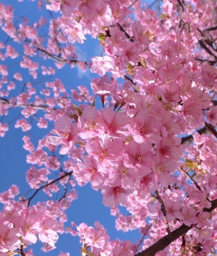 Pin By Fran Cautillo On Bellas Postales Wonderful Flowers Sakura Flower Beautiful Flowers